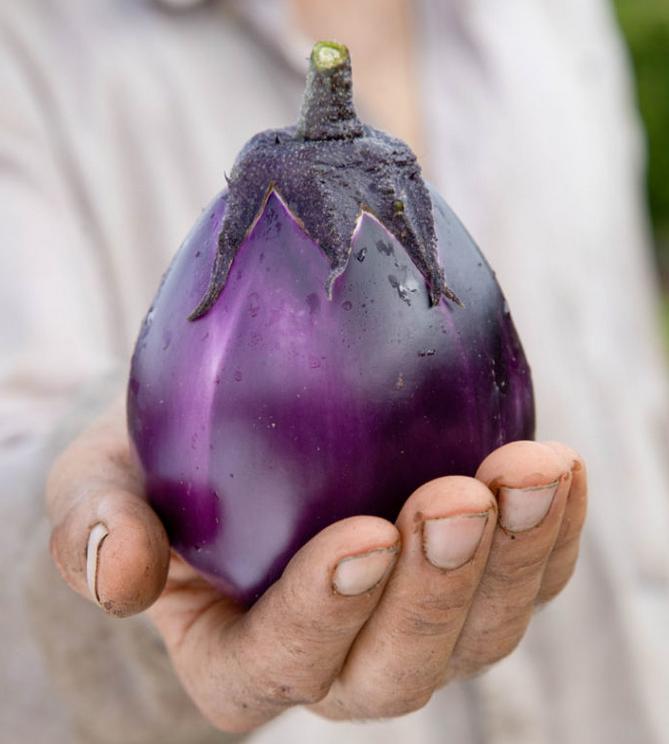 aubergine violette dans la main de Benoît