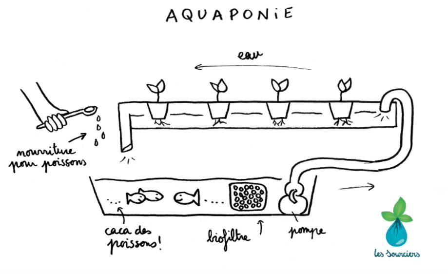 schéma de l'aquaponie