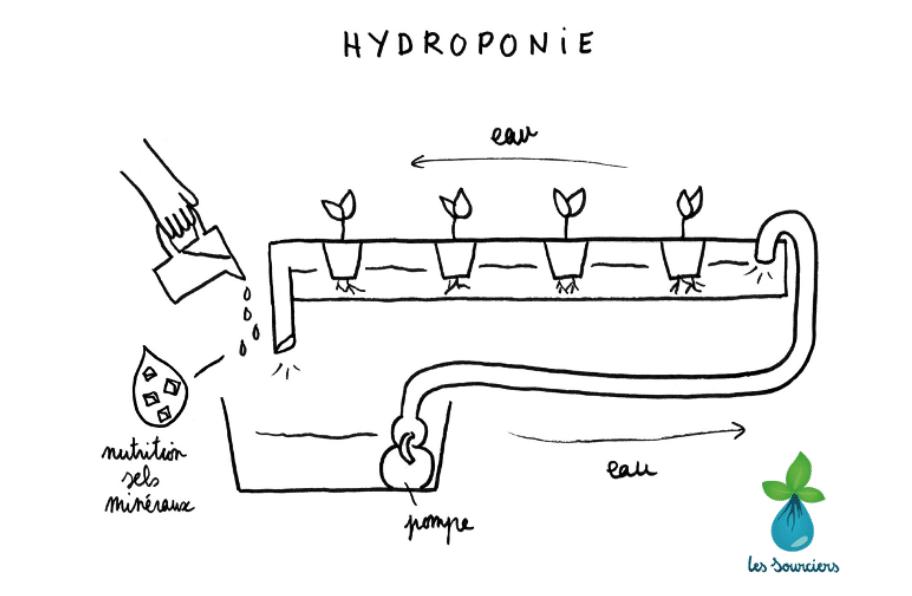 schéma de l'hydroponie