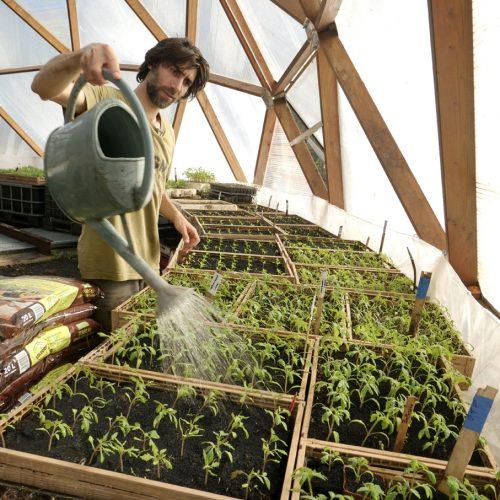 Benoît arrose ses semis dans la serre avec un arrosoir