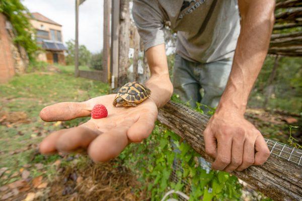 Benoît tient dans sa main une tortue et une framboise