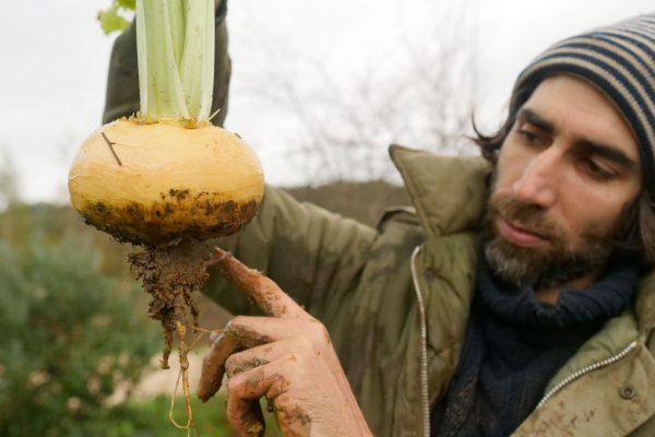 Benoît porte un navet boule d'or et montre les racines